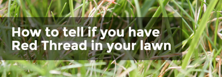 Have you got brown patches on your lawn?