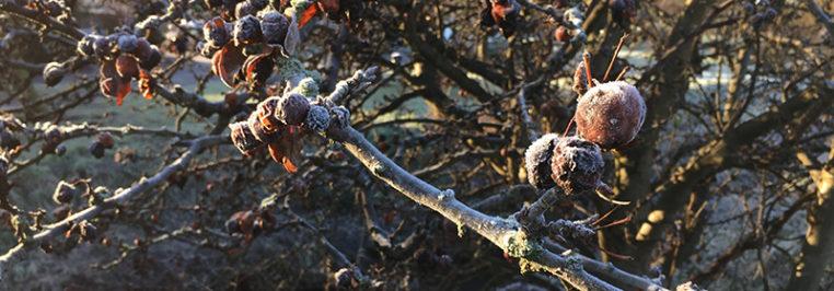 Frosty Mornings in Wombourne