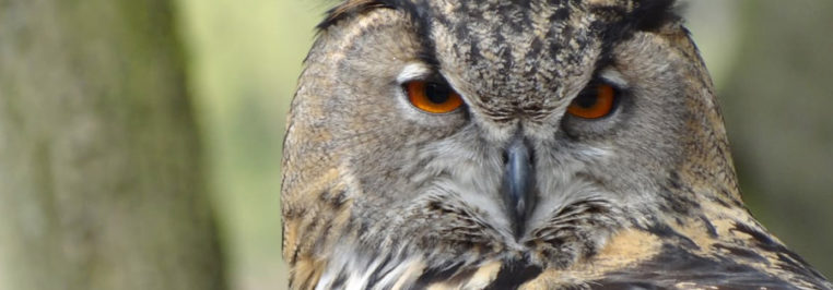New World Owl Centre